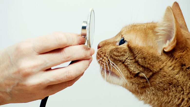 Abnormal Diaphragm Opening in Cats