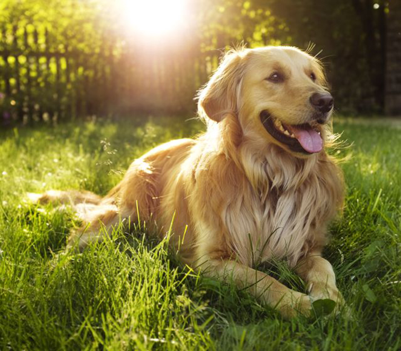 Irregular Growths in the Lower Intestines of Dogs